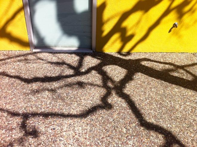 BonAir Tree Shadow