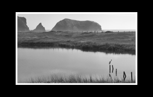 Rodeo Beach Wetland