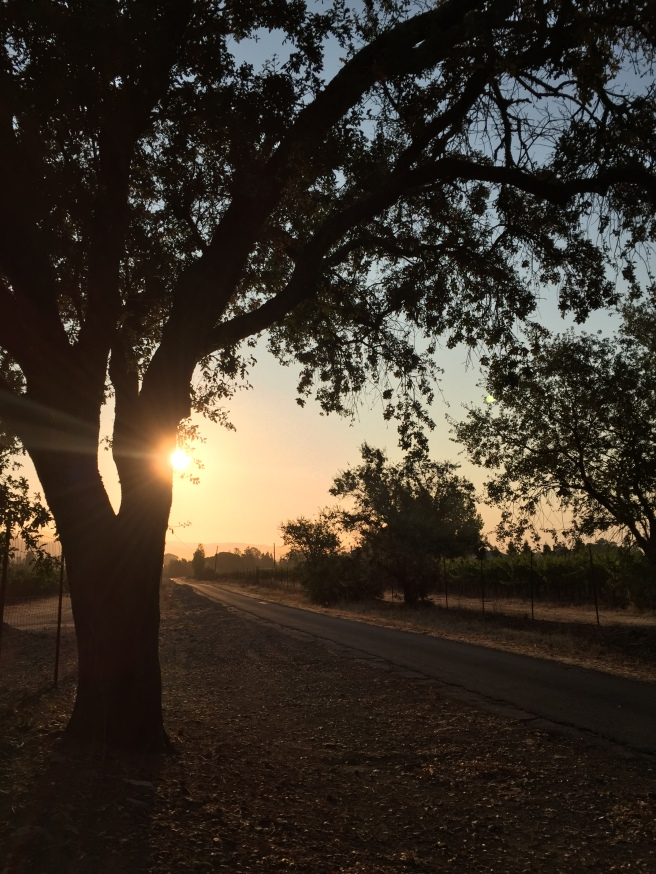 day-133-roadside-sunrise-tree
