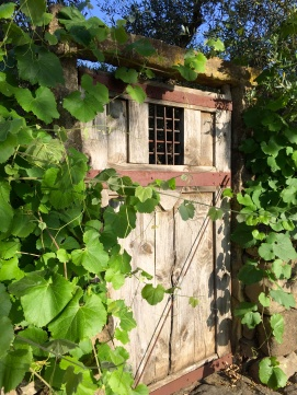 day-30-vineyard-door_5567