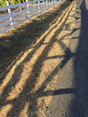 day-47-fence-shadow_5932