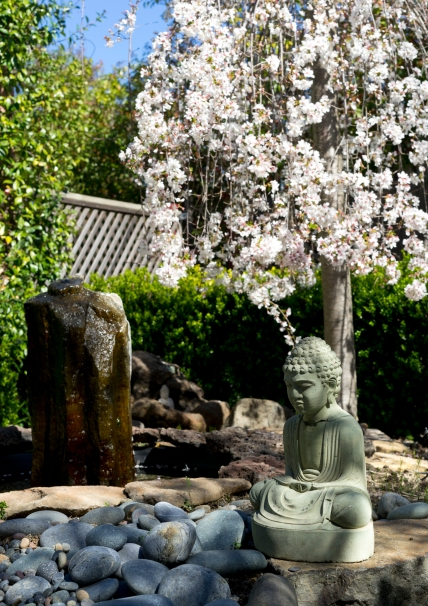 Buddha under Cherry Tree