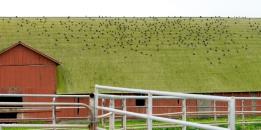 Birds on Barn Point Reyes ©2018 LjWinston