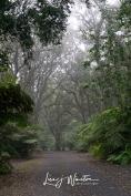 Kalopa Park Fog