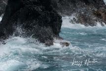 Surf4_Laupahoehoe
