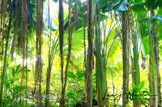 HiKey Jungle