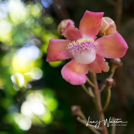 Pink Flower_1