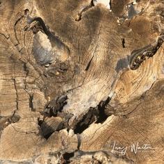Driftwood Lion