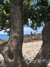 Beach Dragon