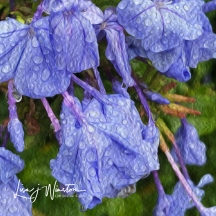 Blue Flowers with Dew