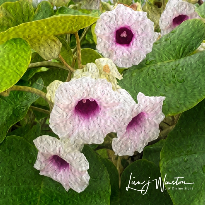 Crown Chakra Flowers