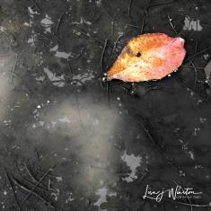 Leaf w Heart-Light