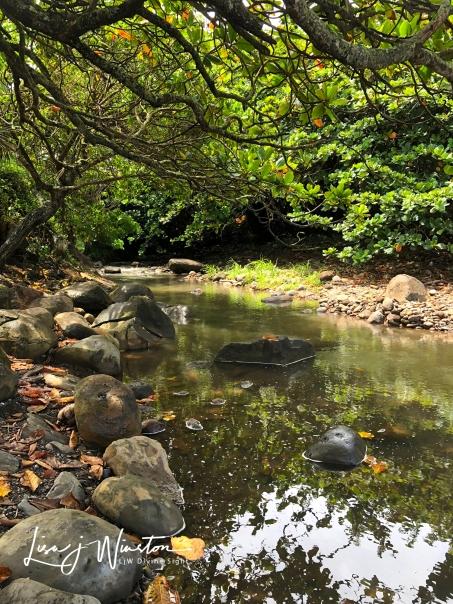 Freshwater Spring Keokea Park