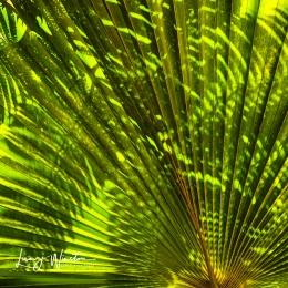 Shadows on Palm Fan