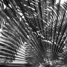 Shadows on Palm Fan BW