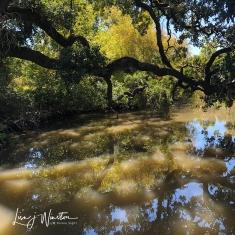 Dappled Sunlight Through Old Oak Branches