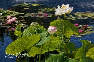 Lotus&Lilies1823