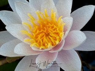 White Lily_wtrmk