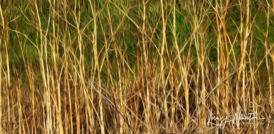 02 Fall Reeds