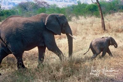 Mama & Baby Elephant_Tanzania