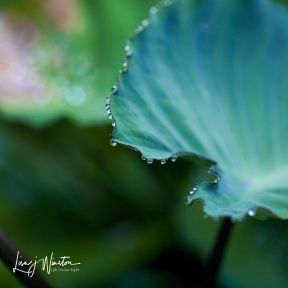 DewDrops Hanging On