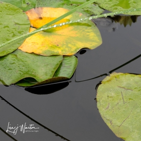 Grass in Lilypond
