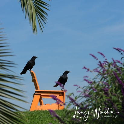 Two Ravens at McNears Beach