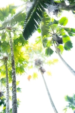 HiKey Palms