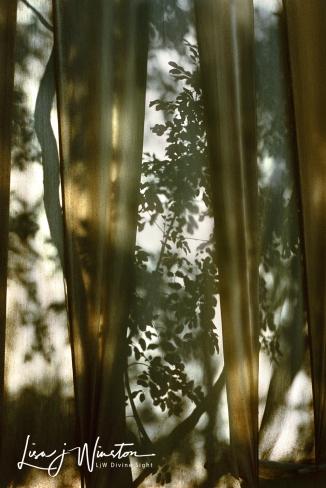Cezanne's Veil