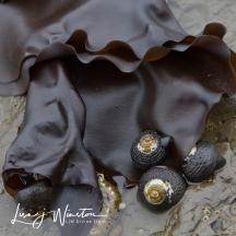 Seaweed & Snails