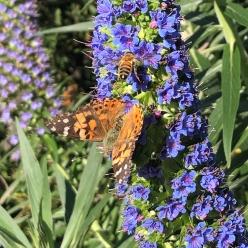 Pollinators_1_web